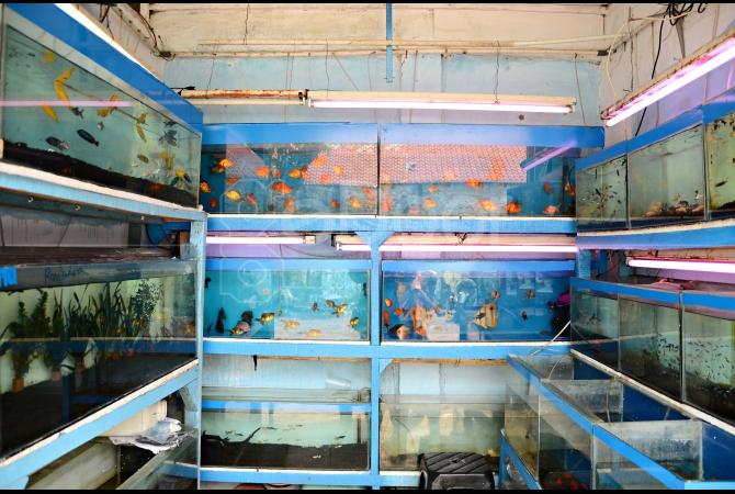 Beragam jenis ikan hias bisa dijumpai di tempat ini
