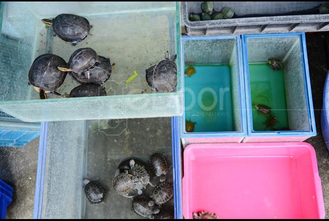 Pedagang hewan reptil juga ada di tempat ini