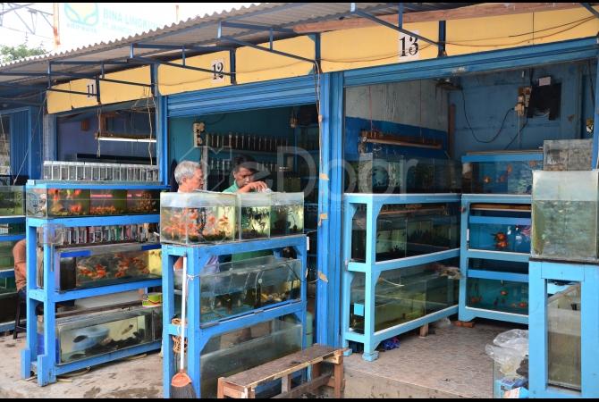 Pembeli pun bisa memilih beragam jenis ikan hias yang ditawarkan oleh para pedagang