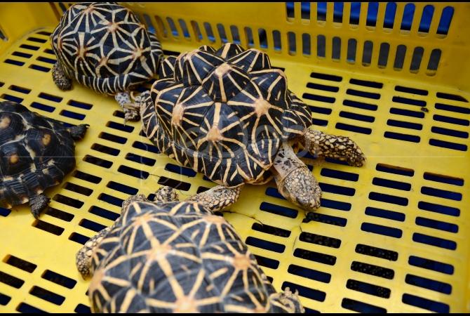 Salah satu jenis kura-kura yang dijual di sini