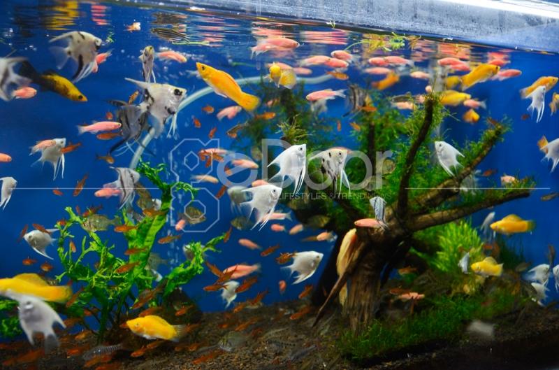 Berbagai Ikan Hias Dapat Dengan Mudah Di Temui Di Sini