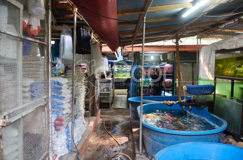 Sentra Ikan Hias Jalan Sumenep Jakarta Pusat