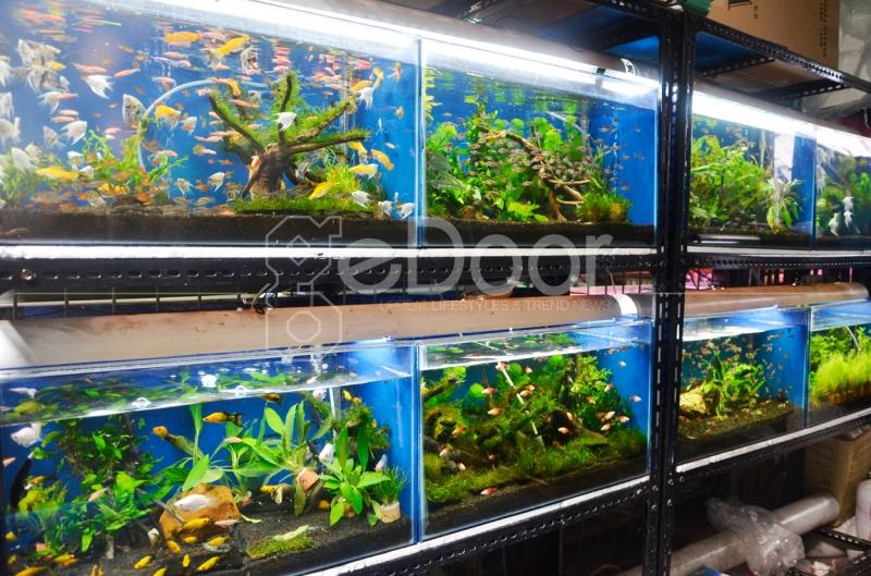 Sentra Ikan Hias Sumenep Juga Menjual Berbagai Macam Akuarium