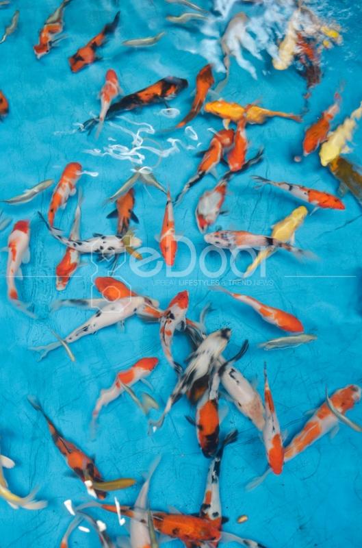 Tak Hanya Ikan Hias Air Tawar, Ikan Hias Air Laut Pun Lengkap Tersedia