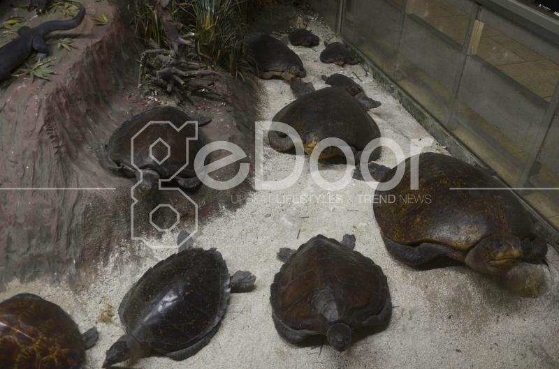 Mengenal Berbagai Jenis Fauna Di Museum Komodo TMII