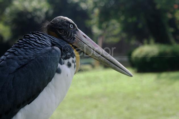 Miniatur Satwa Burung Taman Satwa TMII