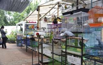 Hewan Peliharaan Unik Ramaikan Florina 2016