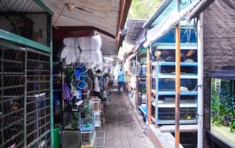 Jalan Sumenep Sentra Ikan Hias Terlengkap Di Jakarta