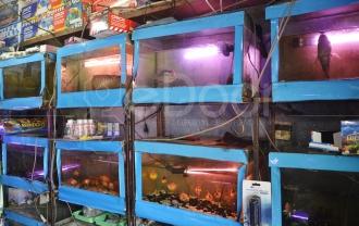 Jelajah Ikan Hias Jalan Radin Inten Jakarta Timur