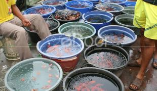 Pasar Ikan Hias Jatinegara