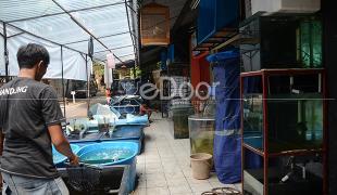 Pasar Ikan Radio Dalam