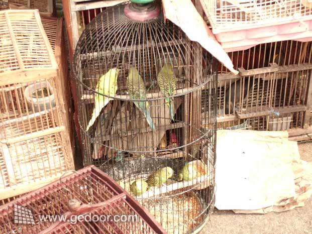 Burung Kenari dan Perkici Dari Pasar Burung Jatinegara