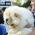 Kontes Anjing Berbakat Di Dog Does Disco Sakura 2015