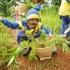 Wisata Edutainment D'Kandang Amazing Farm