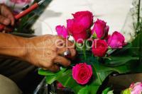 Cari Rangkaian Bunga Ke Rawa Belong Saja