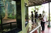 Koleksi Ikan Taman Margasatwa Ragunan