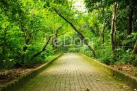 Hutan Kota Srengseng Kawasan Hijau Di Barat Jakarta