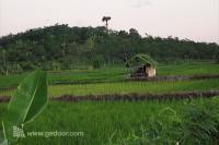Alam Tanjung Lesung